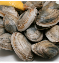 Steamer Clams (out of stock! harvest sites have frozen over)