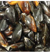 Mussels (out of stock! harvest sites have frozen over)